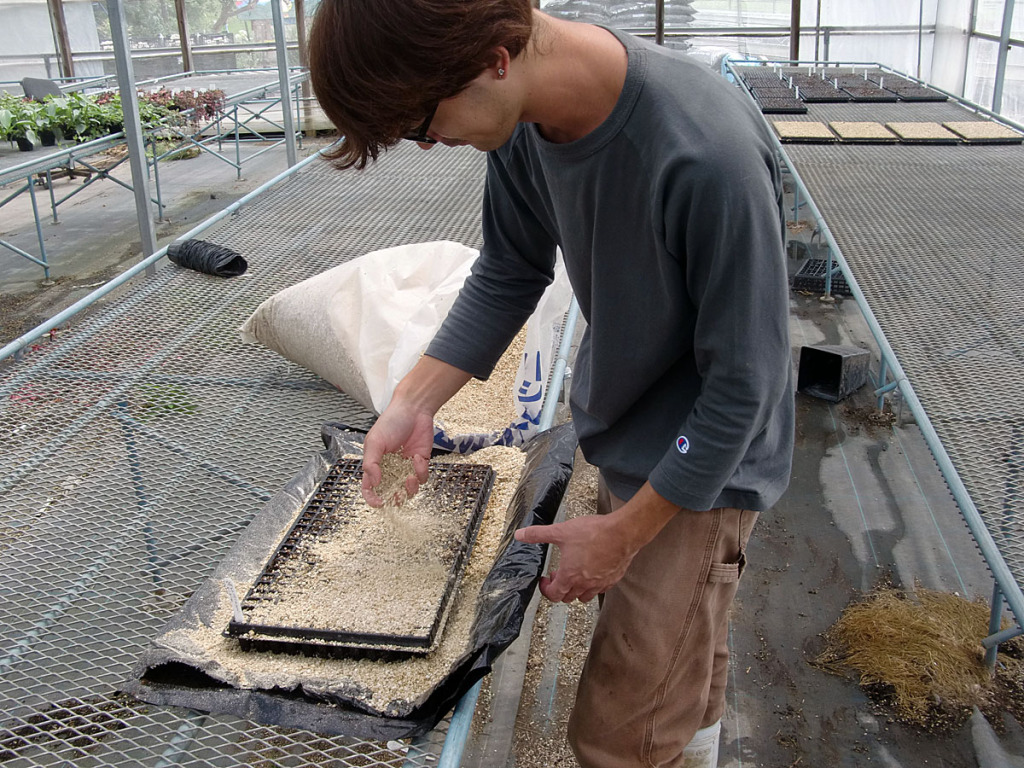 蒔き終わると、覆土という作業を行います(^^)/