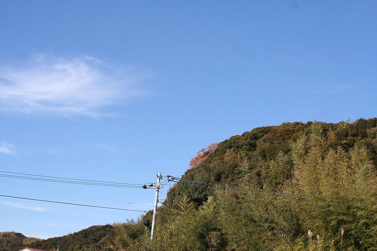 渋〜い紅葉